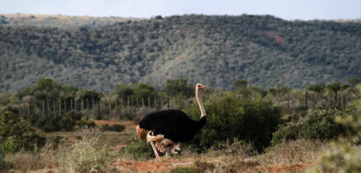 Sudáfrica Ruta Jardín completa con extensión a Kruger
