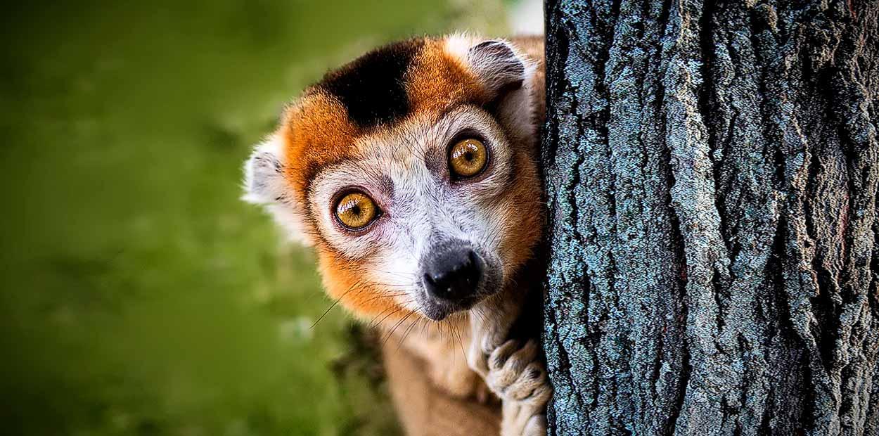 Madagascar Sur en servicio privado y guía en español