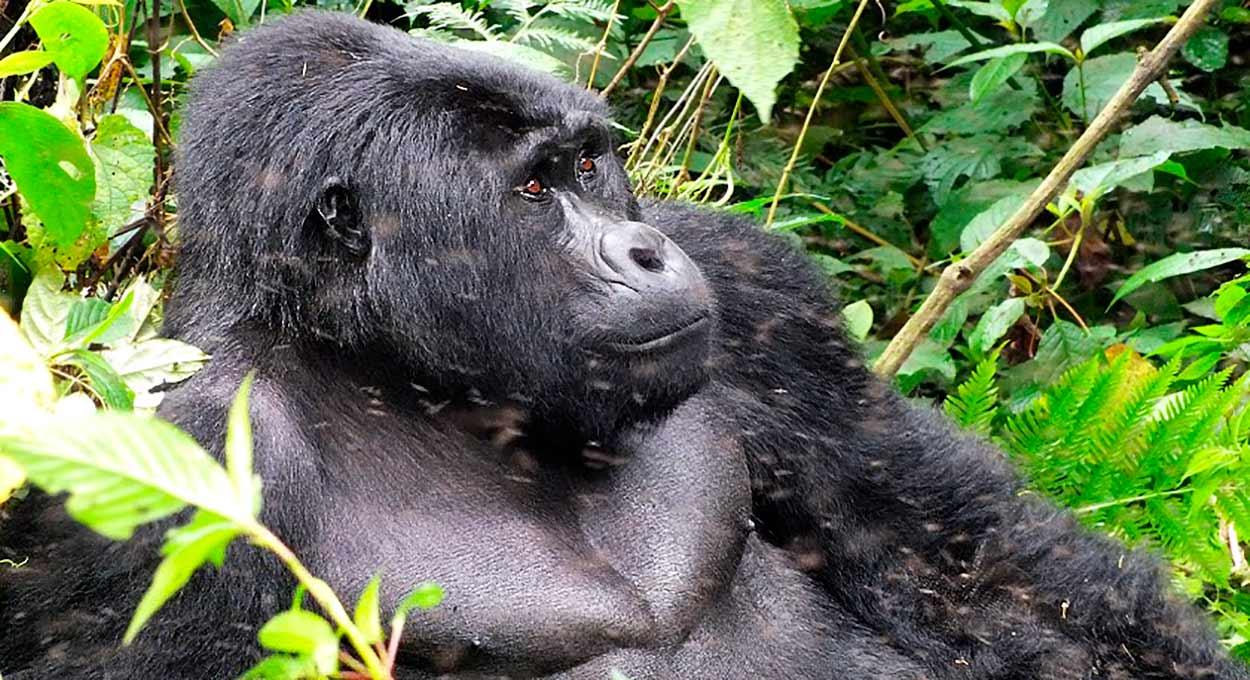 Safari Uganda esencial en privado