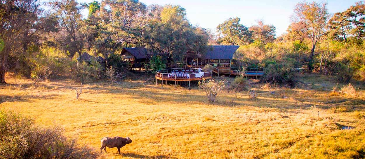 Rra Dinare Lodge (Delta de Okavango) - SAFARI BOTSWANA EN PRIVADO
