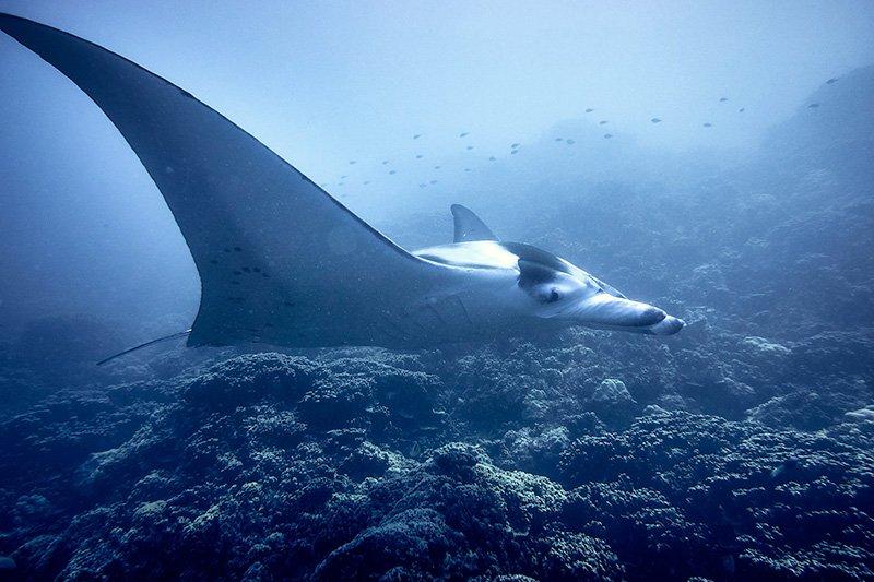 Buceo en Polinesia de Gema y David 03
