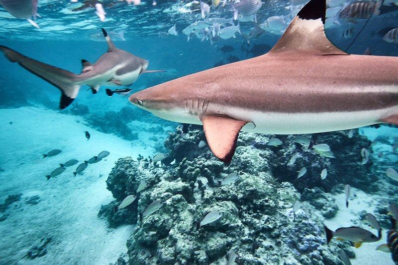Buceo en Polinesia de Gema y David 01