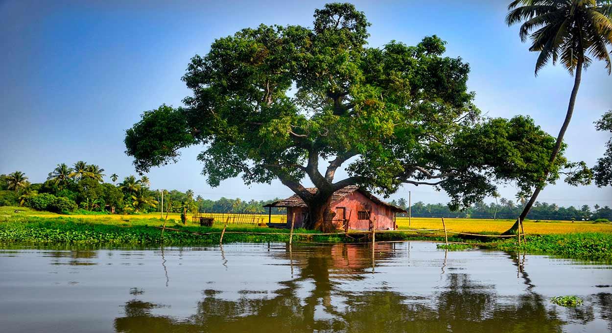 Backwaters (Kerala) - India del Sur en privado