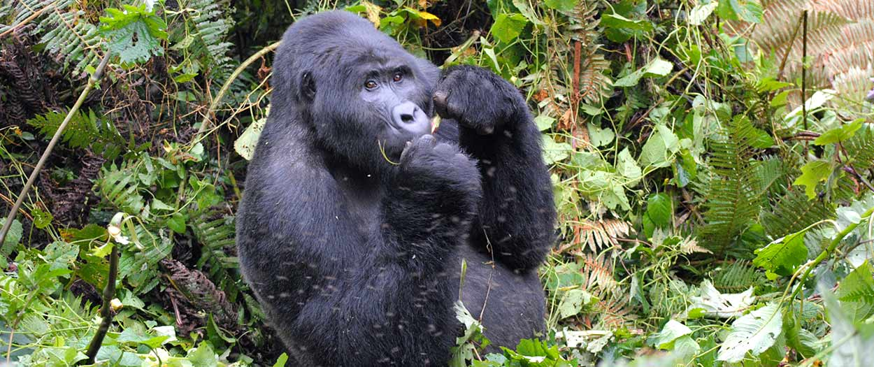 safari Uganda en Semana Santa 2021