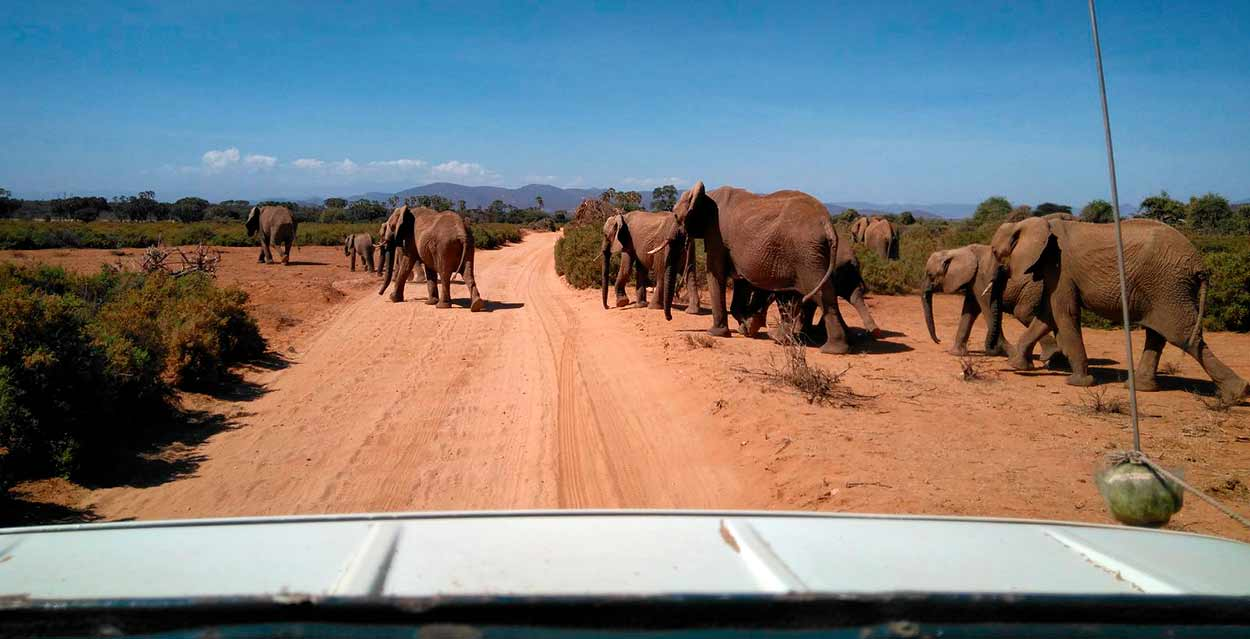 Kenia y Tanzania en servicio Privado