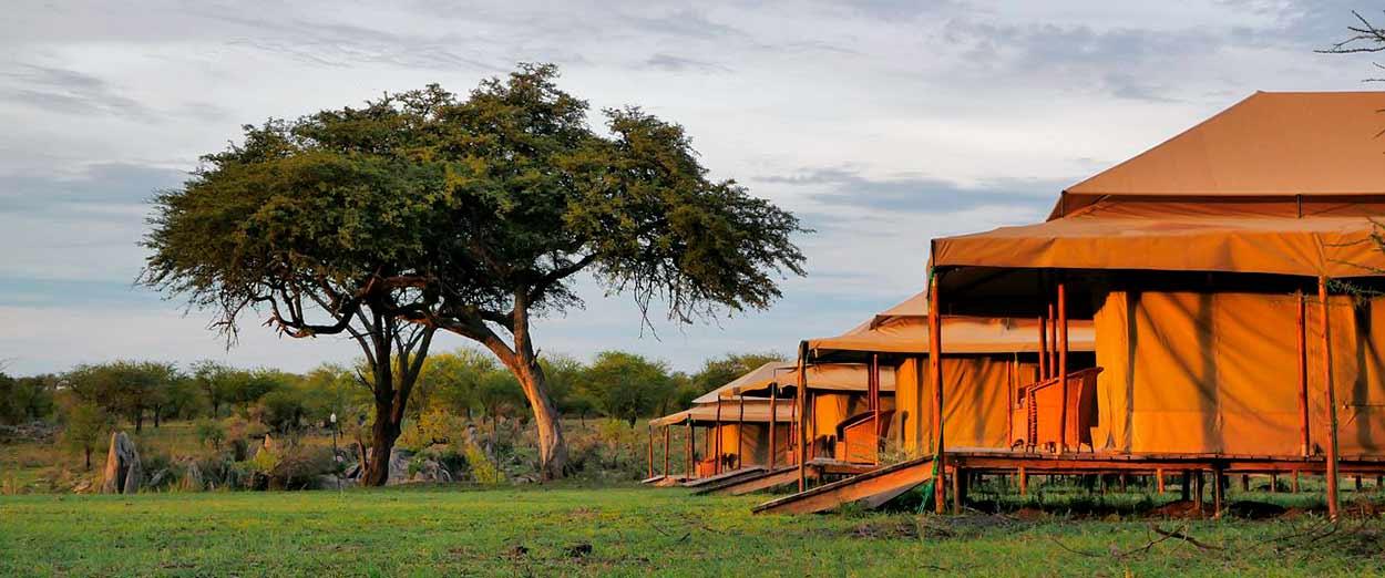 Mbugani Serengeti Seronera Camp - safari Tanzania esencial en servicio compartido