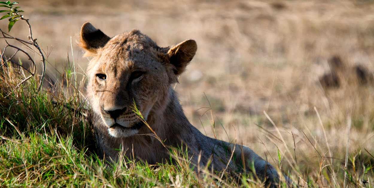 Safari Tanzania Norte en servicio compartido