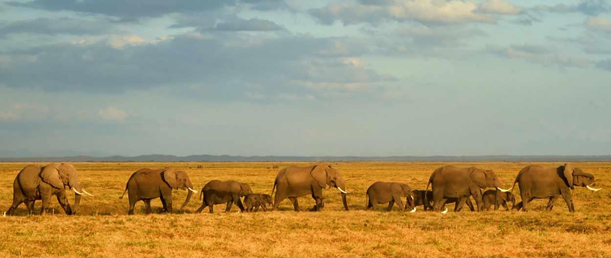 Safari Tanzania esencial en servicio compartido