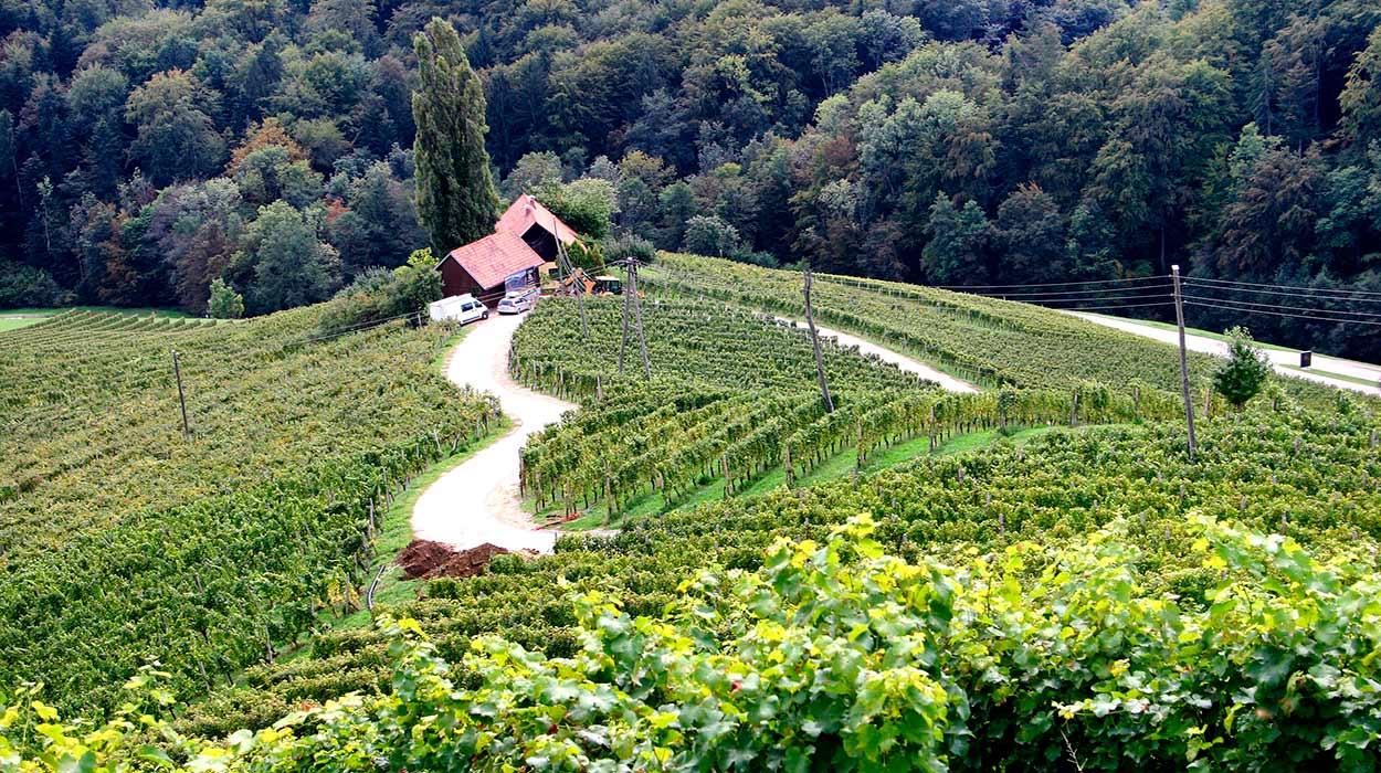 Un viñedo ecológico en Eslovenia, origen de la muy buena calificación de sus vinos - Image by Walter Himmelbauer from Pixabay - 14 Razones para viajar a Eslovenia