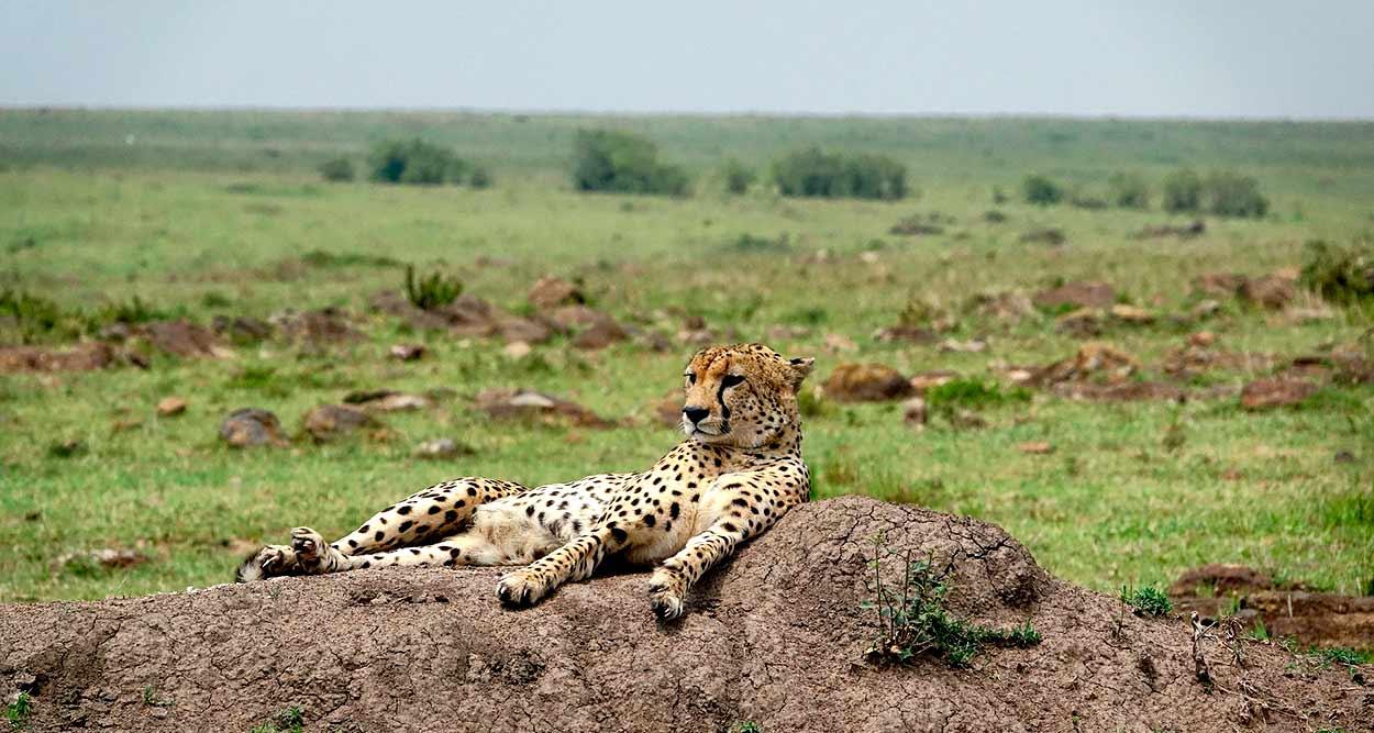 Kenia en Privado con Masai Mara - Image by Margo Tanenbaum from Pixabay