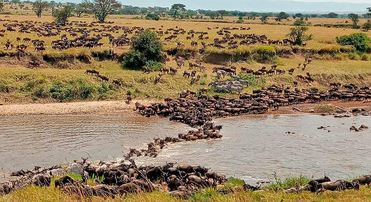 Qué ver en Kenia en 14 días - La Gran Emigración en el mítico río Mara
