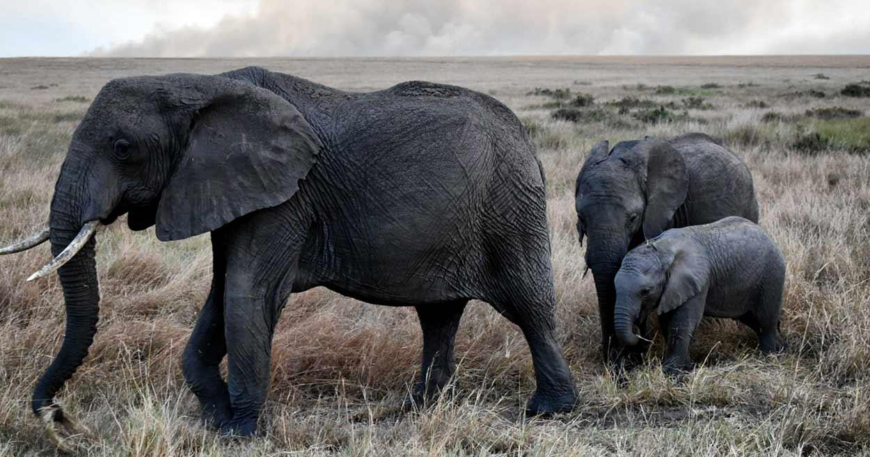 Testimonio de Safari en Kenia de Bea y Chema - elefantes