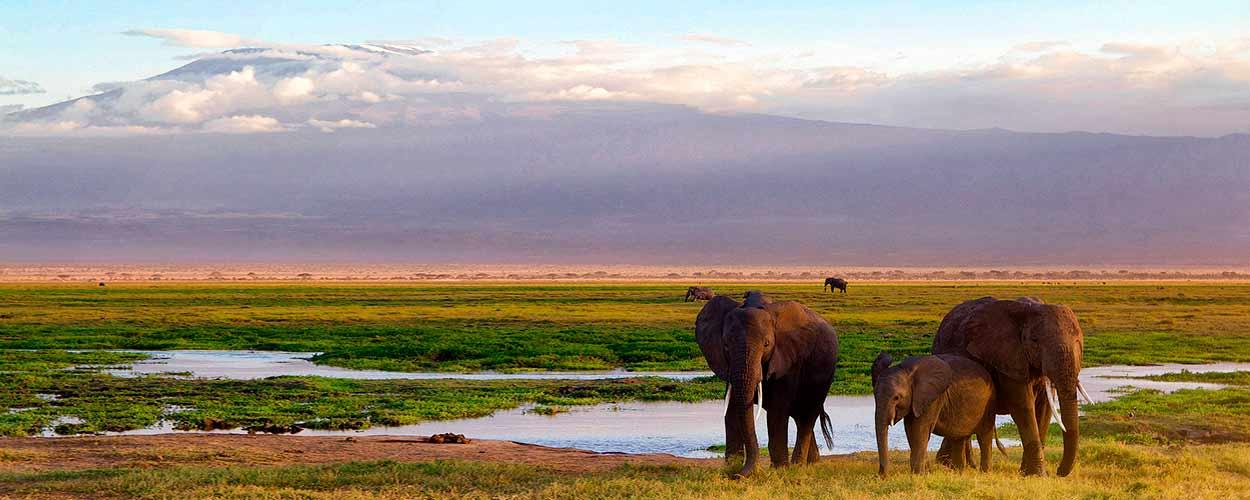 AMBOSELI - guía de turismo de Kenia