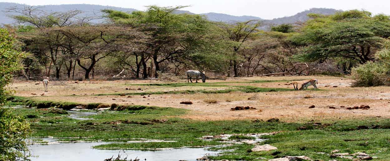 Buffalo springs - guía de turismo de Kenia