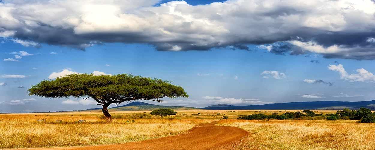 MASAI MARA - guía de turismo de Kenia