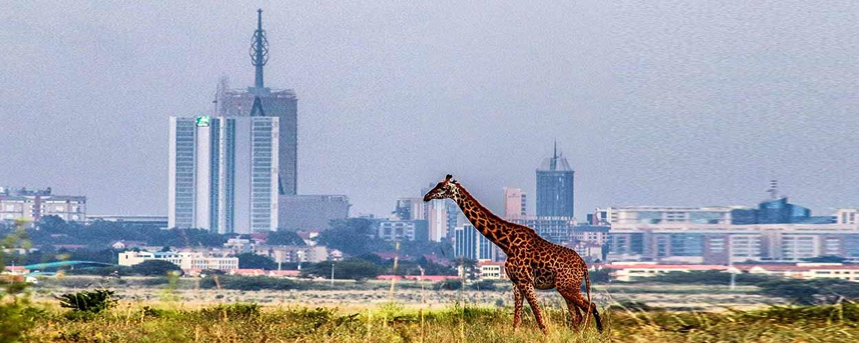 Parque Nacional de Nairobi - guía de turismo de Kenia