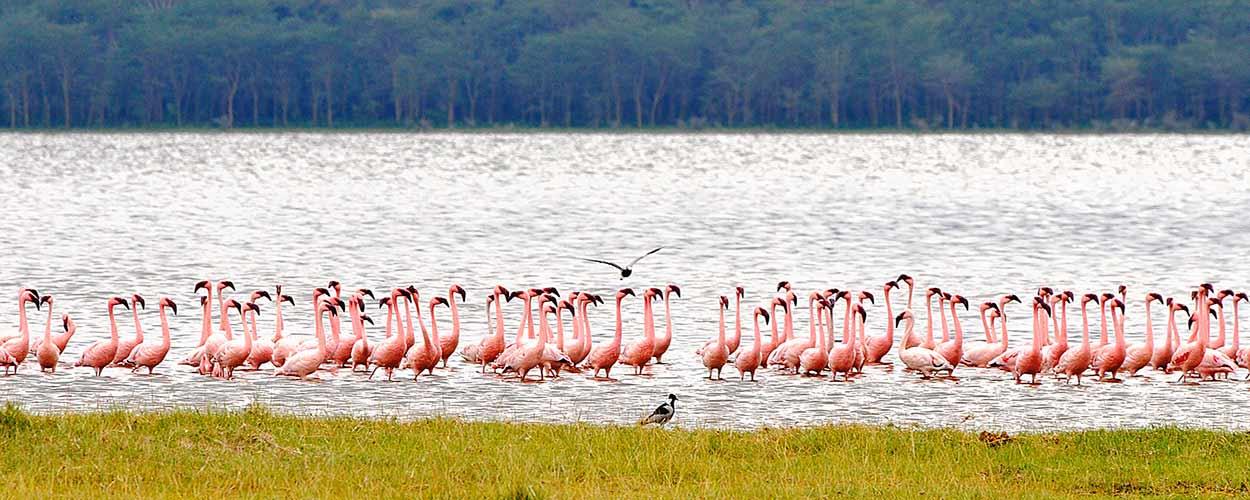 LAGO NAKURU - guía de turismo de Kenia