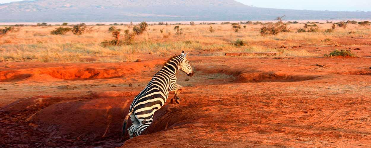 Tsavo Este - guía de turismo de Kenia